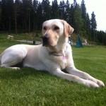 Ledrhunden Flinga