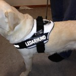Bild: Ny ledarhunds sele
