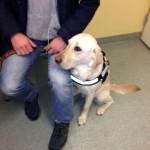 Bild: Ledarhunden Flinga får vara med på sjukhuset, Astrid Lindgrens barnsjukhus