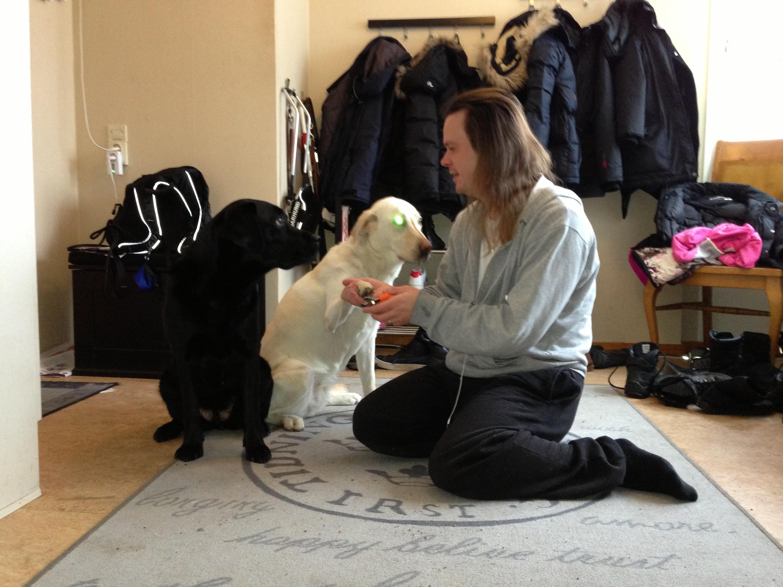 Bild: Joakim Nömell klipper klor på ledarhunden Flinga och Ella