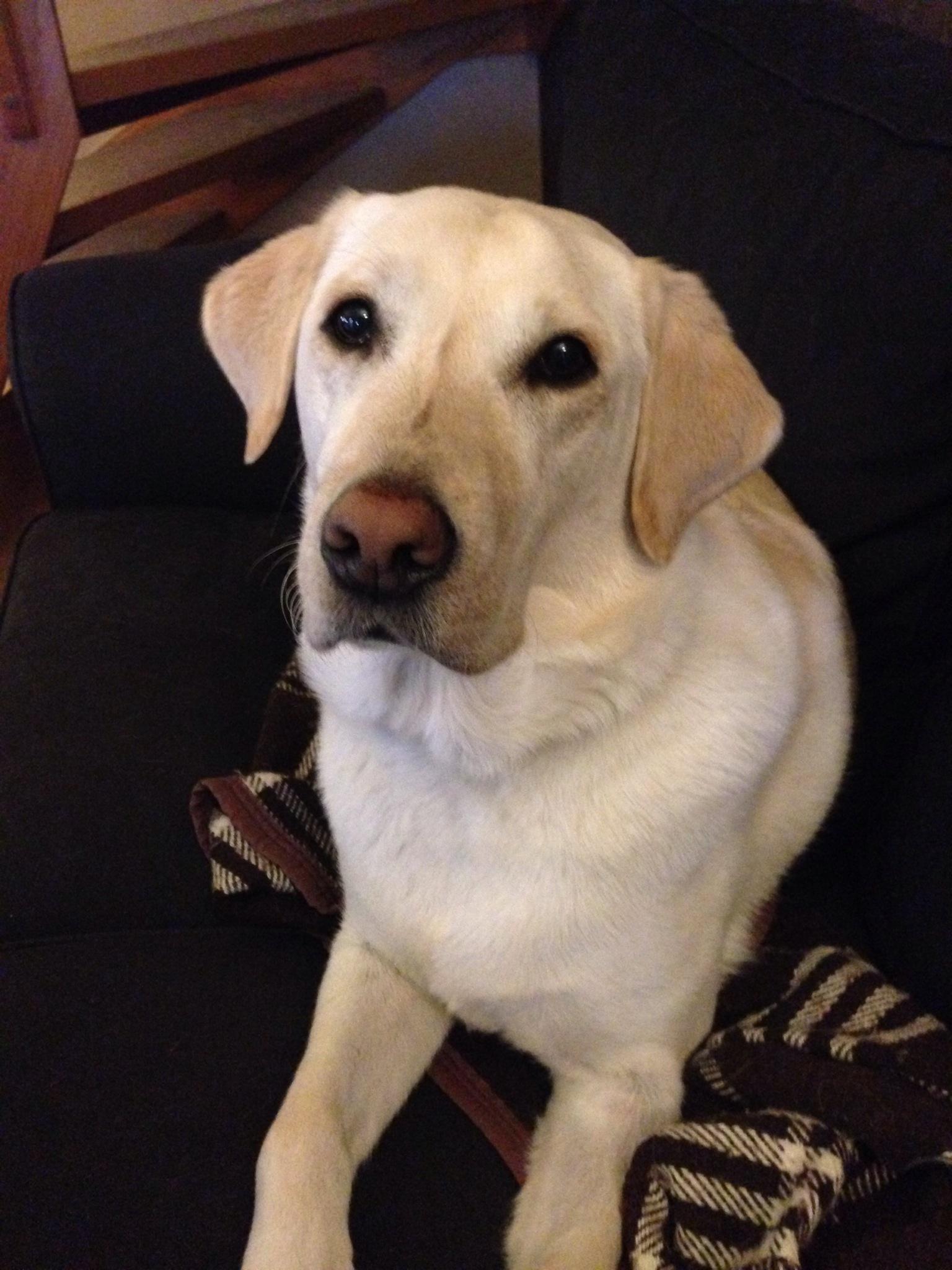 Bild: Ledarhunden Flinga ligger i en soffa
